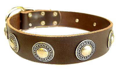 Deluxe Leather Dog Collar with jewelry for schutzhund dogs