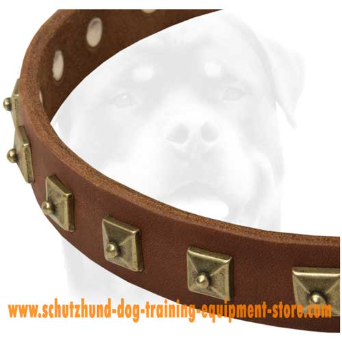 Perfectly Decorated Leather Dog Collar