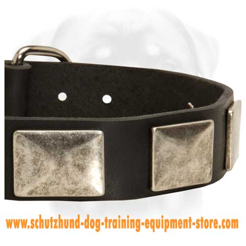 Stunning Leather Dog Collar