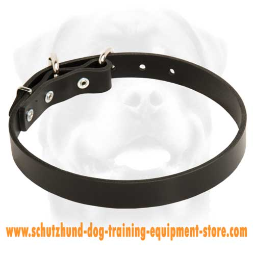Leather Dog Collar For Active Dogs