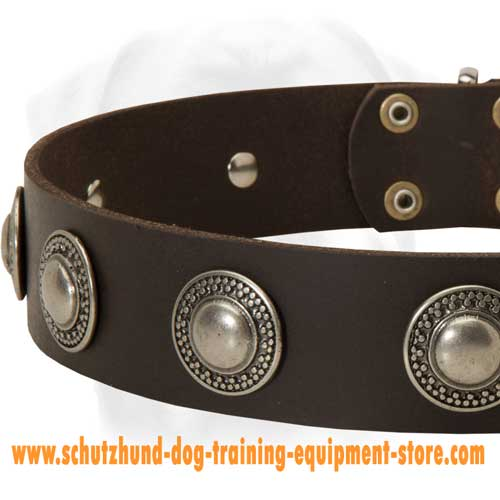 Leather Dog Collar With Ergonomic Design