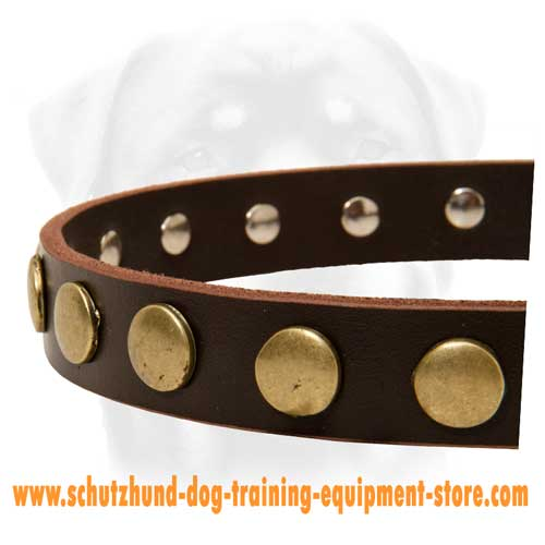 Perfect Leather Dog Collar