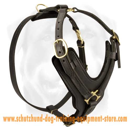 Leather Dog Harness With Excessive Comfort