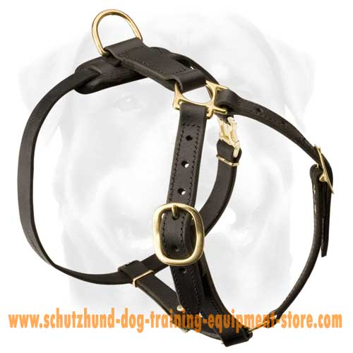 Leather Dog Harness For Everyday Walking