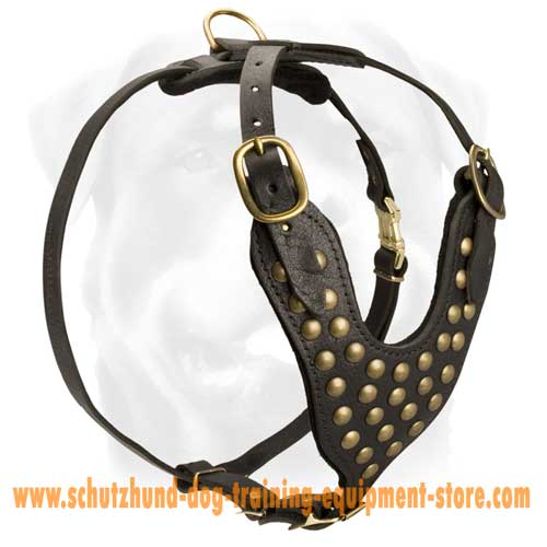 Rocking Leather Dog Harness