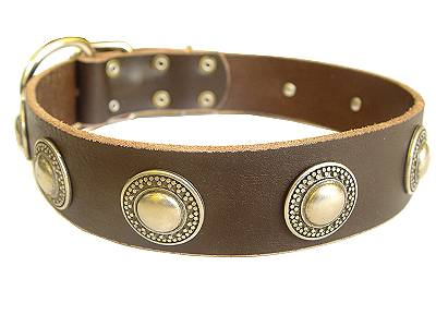 Gorgeous Wide Leather Dog Collar With Silver Conchos