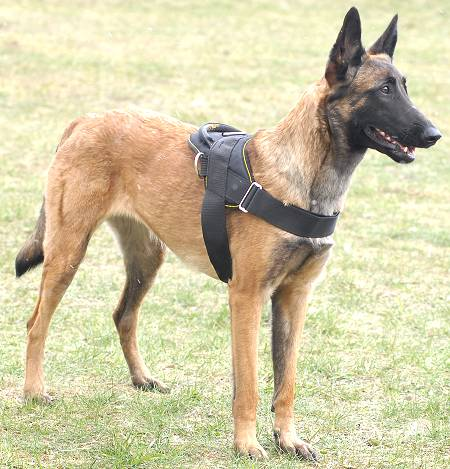 schutzhund nylon dog harness with handle